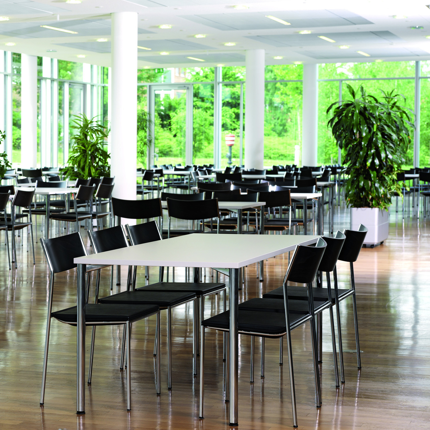 3150 Scorpii Canteen Tables