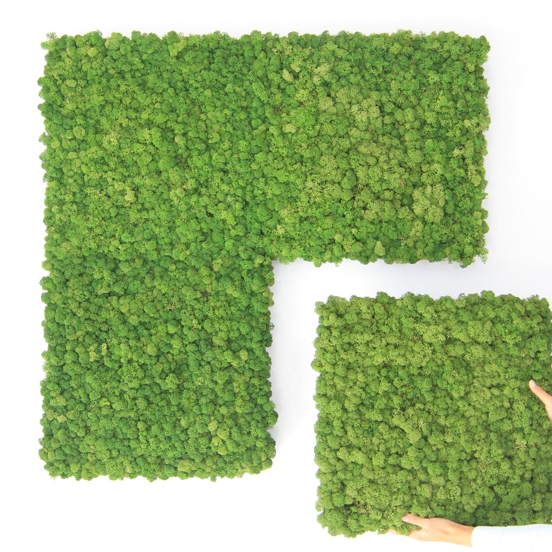 Nordgröna Moss Convex