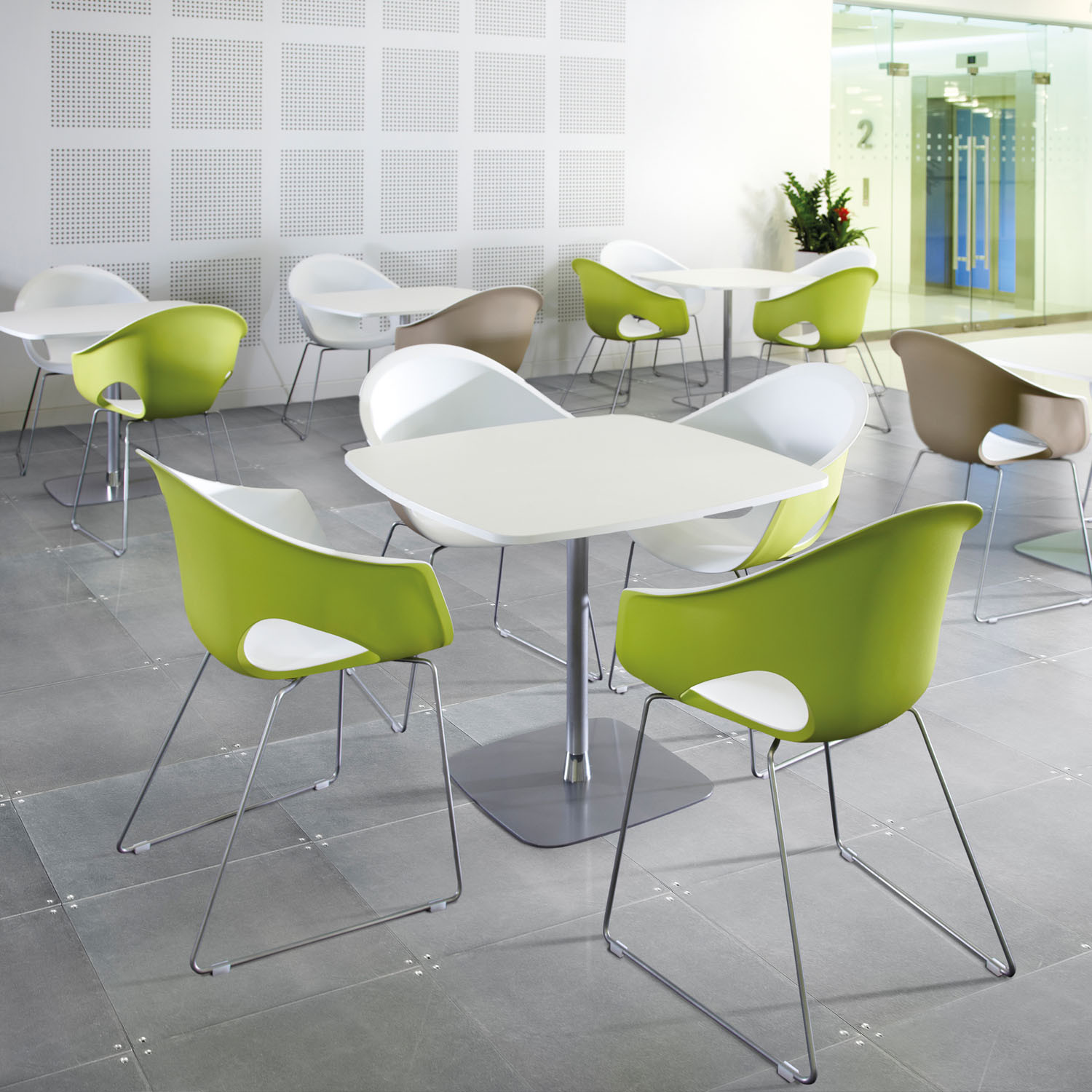 Zest Dining Chair by Connection